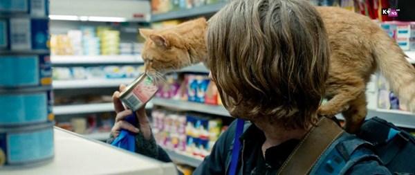 A street cat named Bob – Người bạn đồng hành 4 chân