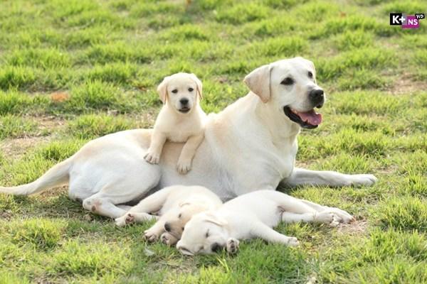 Hearty paws 2 – Cuộc phiêu lưu của chú chó